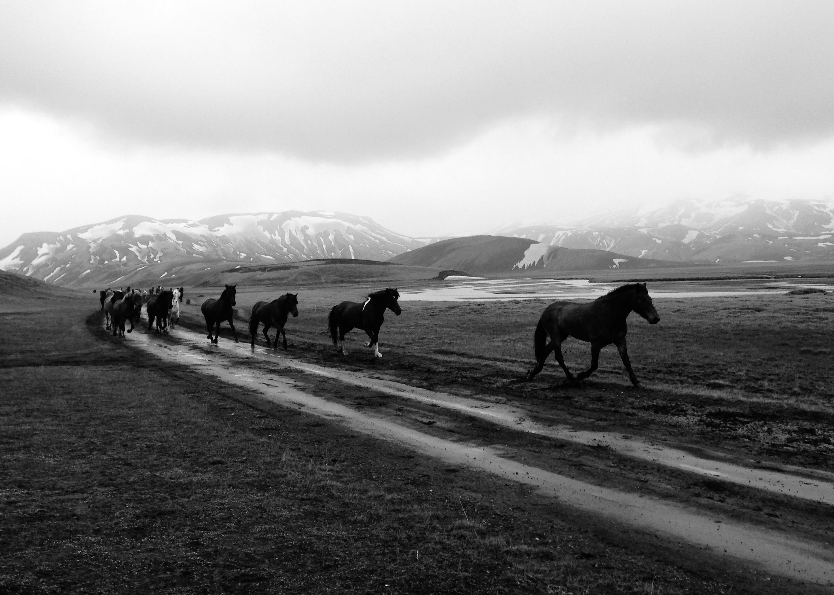 Caballos dejando Landmanalaugar