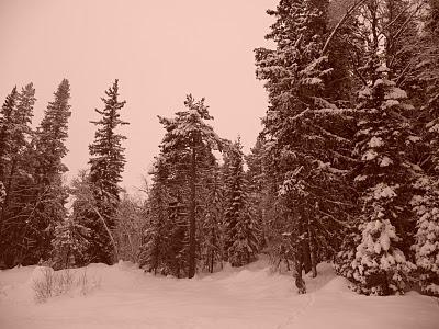 Noruega Dic 2009 102 el bosque