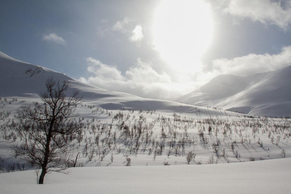3-‐Fotaza. Durante un paseo en trineo de perros hemos podido ver un paisaje sin comparación, donde tan sólo la nieve virgen, los árboles y el sol armonizan el paisaje.