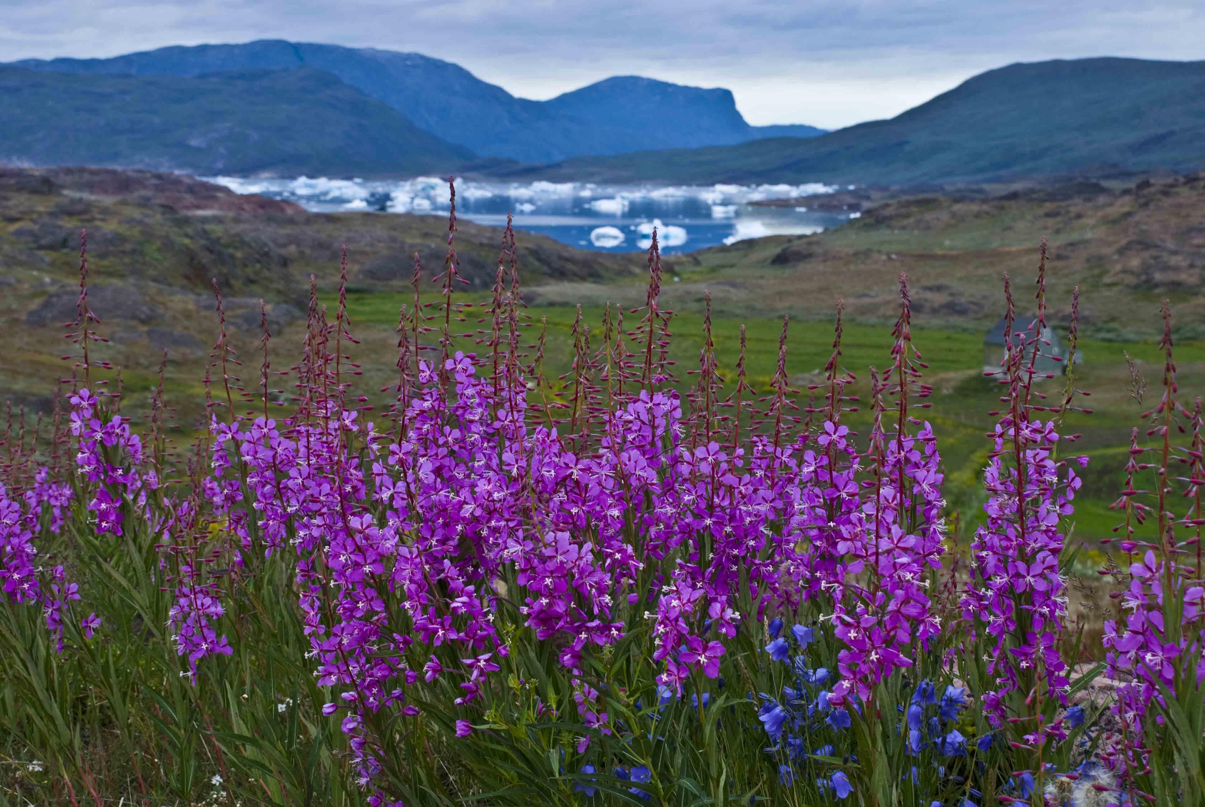 Juan Carlos Orihuel Gómez – Fotos del viaje Maravillas de Groenlandia